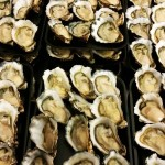 Coffs Harbour Oysters